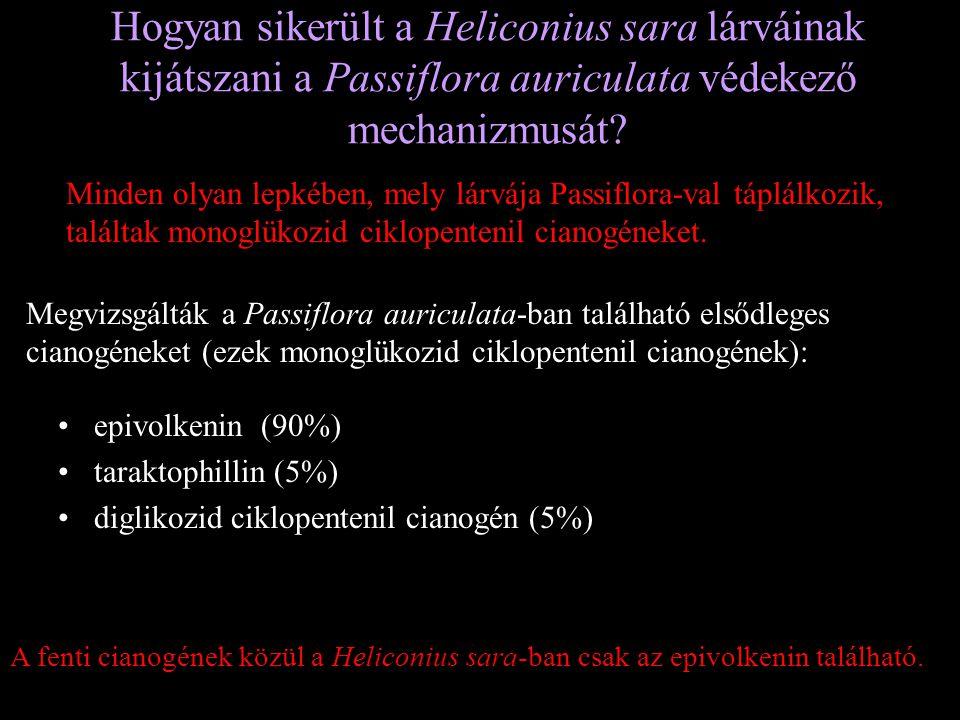 Hogyan sikerült a Heliconius sara lárváinak kijátszani a Passiflora auriculata védekező mechanizmusát
