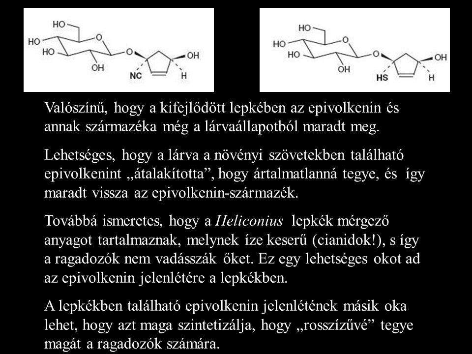 Valószínű, hogy a kifejlődött lepkében az epivolkenin és annak származéka még a lárvaállapotból maradt meg.