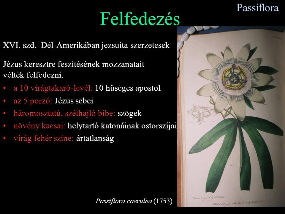 Felfedezés Passiflora XVI. szd. Dél-Amerikában jezsuita szerzetesek