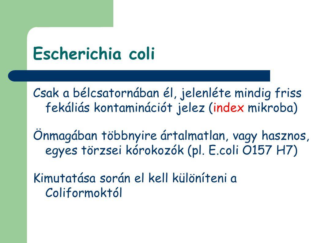 Escherichia coli Csak a bélcsatornában él, jelenléte mindig friss fekáliás kontaminációt jelez (index mikroba)