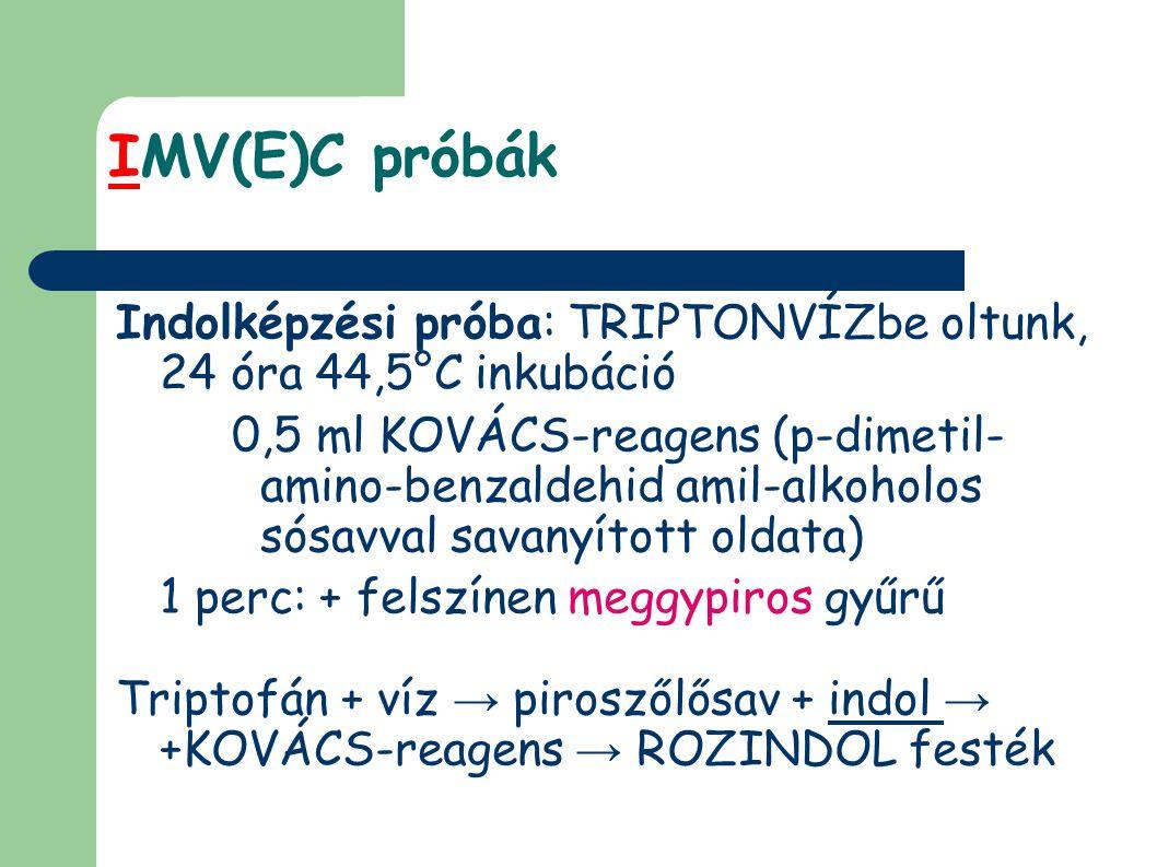 IMV(E)C próbák Indolképzési próba: TRIPTONVÍZbe oltunk, 24 óra 44,5°C inkubáció.