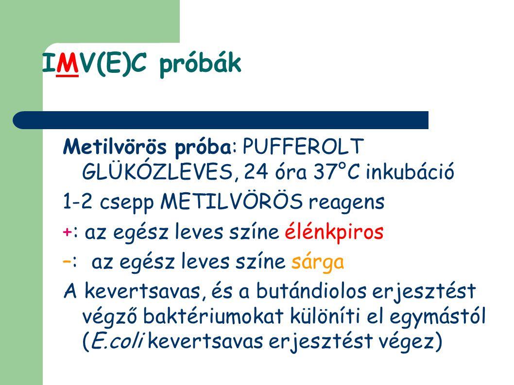 IMV(E)C próbák Metilvörös próba: PUFFEROLT GLÜKÓZLEVES, 24 óra 37°C inkubáció. 1-2 csepp METILVÖRÖS reagens.