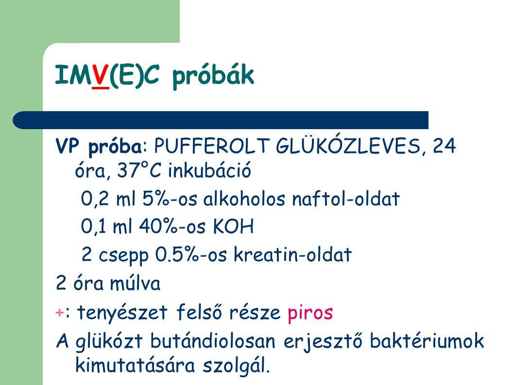 IMV(E)C próbák VP próba: PUFFEROLT GLÜKÓZLEVES, 24 óra, 37°C inkubáció
