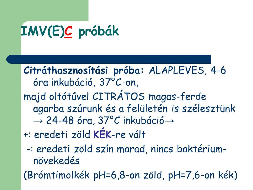 IMV(E)C próbák Citráthasznosítási próba: ALAPLEVES, 4-6 óra inkubáció, 37°C-on,