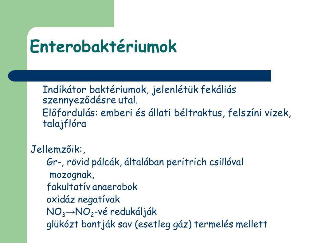 Enterobaktériumok Indikátor baktériumok, jelenlétük fekáliás szennyeződésre utal.