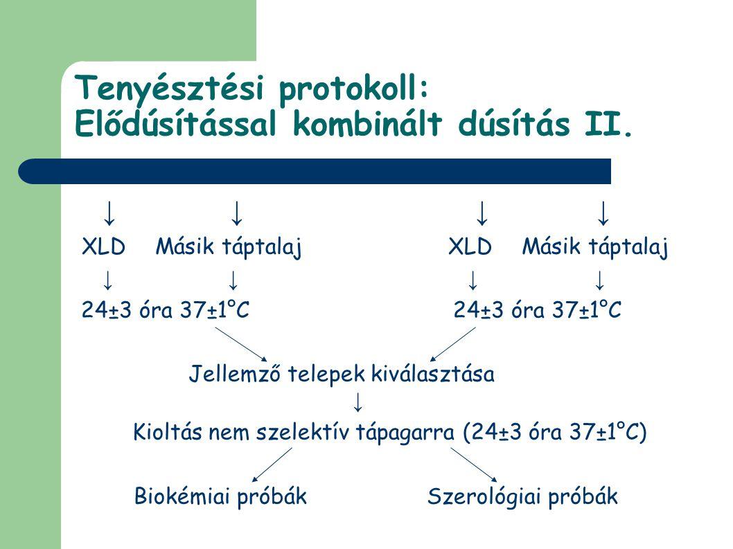 Tenyésztési protokoll: Elődúsítással kombinált dúsítás II.