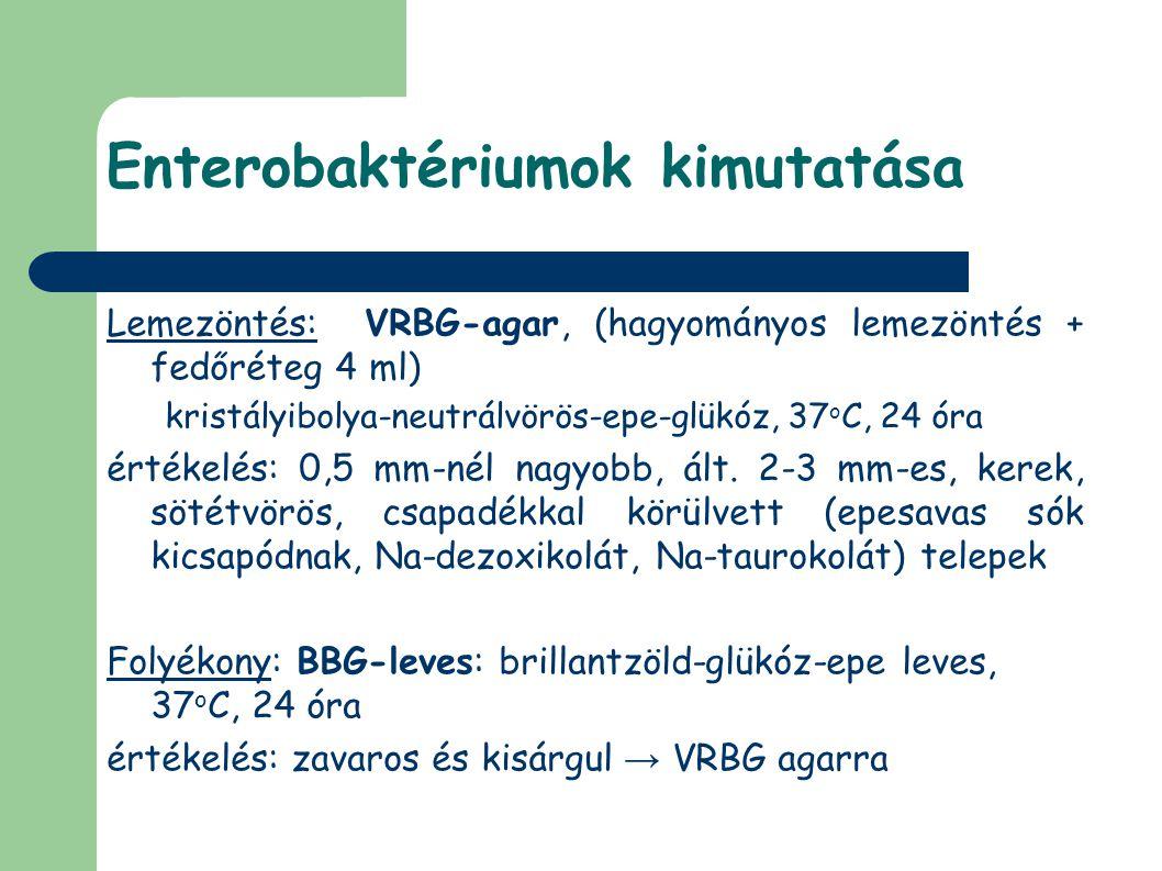 Enterobaktériumok kimutatása