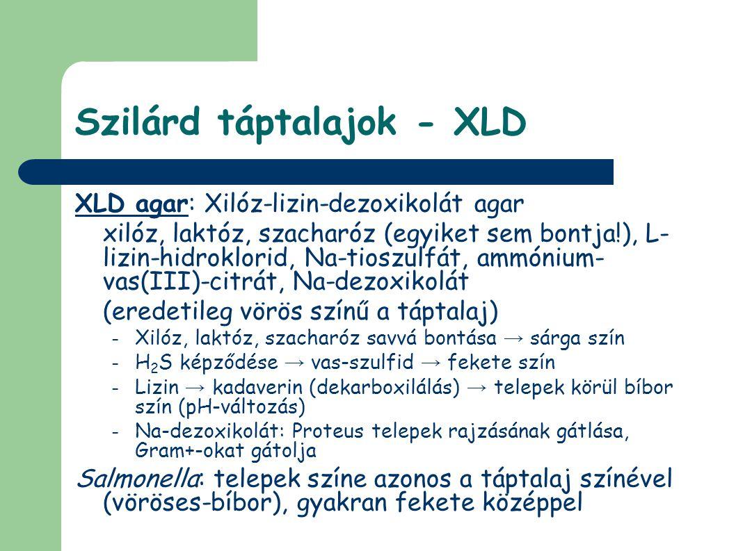 Szilárd táptalajok - XLD