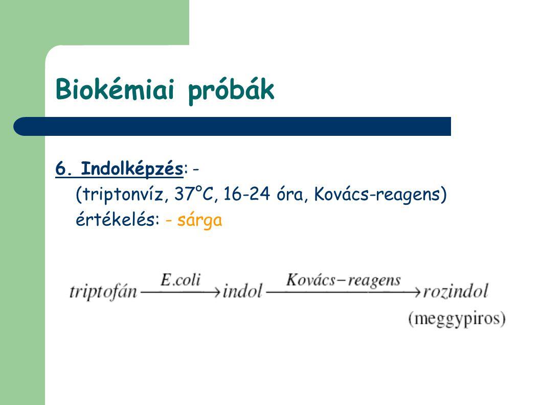 Biokémiai próbák 6. Indolképzés: -