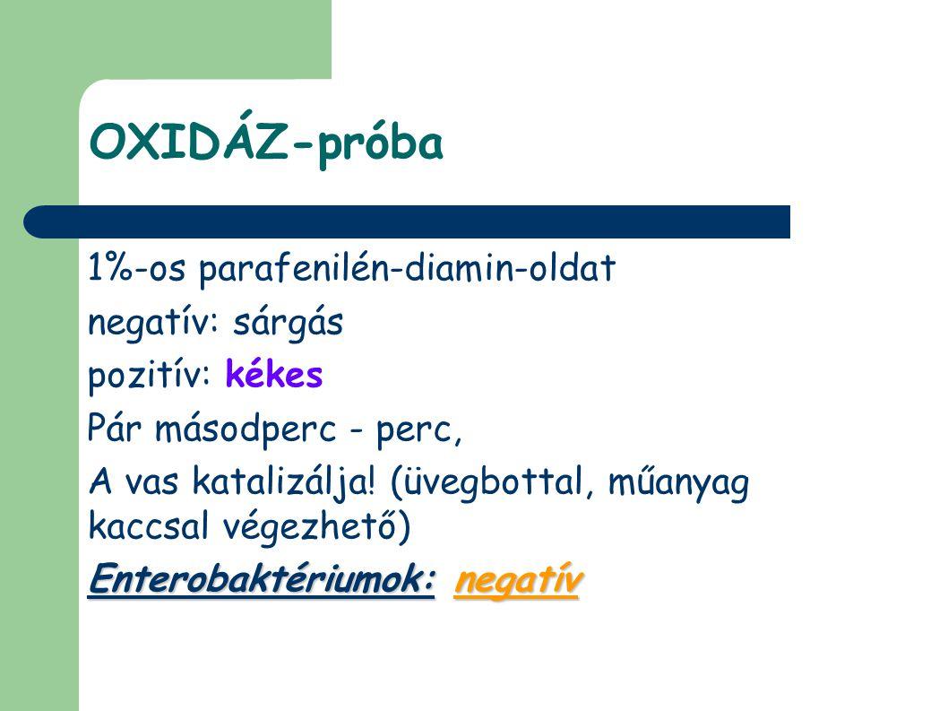OXIDÁZ-próba 1%-os parafenilén-diamin-oldat negatív: sárgás