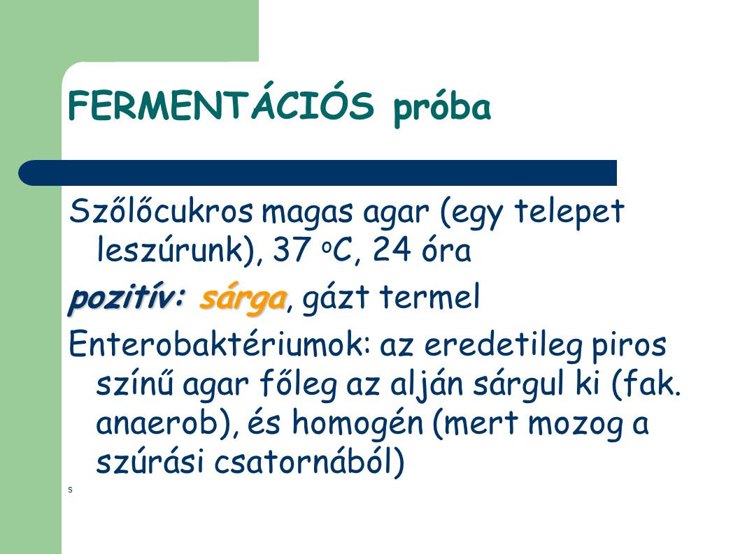 FERMENTÁCIÓS próba Szőlőcukros magas agar (egy telepet leszúrunk), 37 oC, 24 óra. pozitív: sárga, gázt termel.