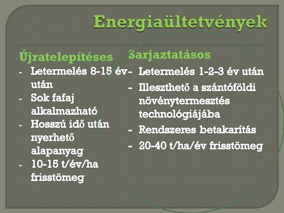 Energiaültetvények Sarjaztatásos Újratelepítéses