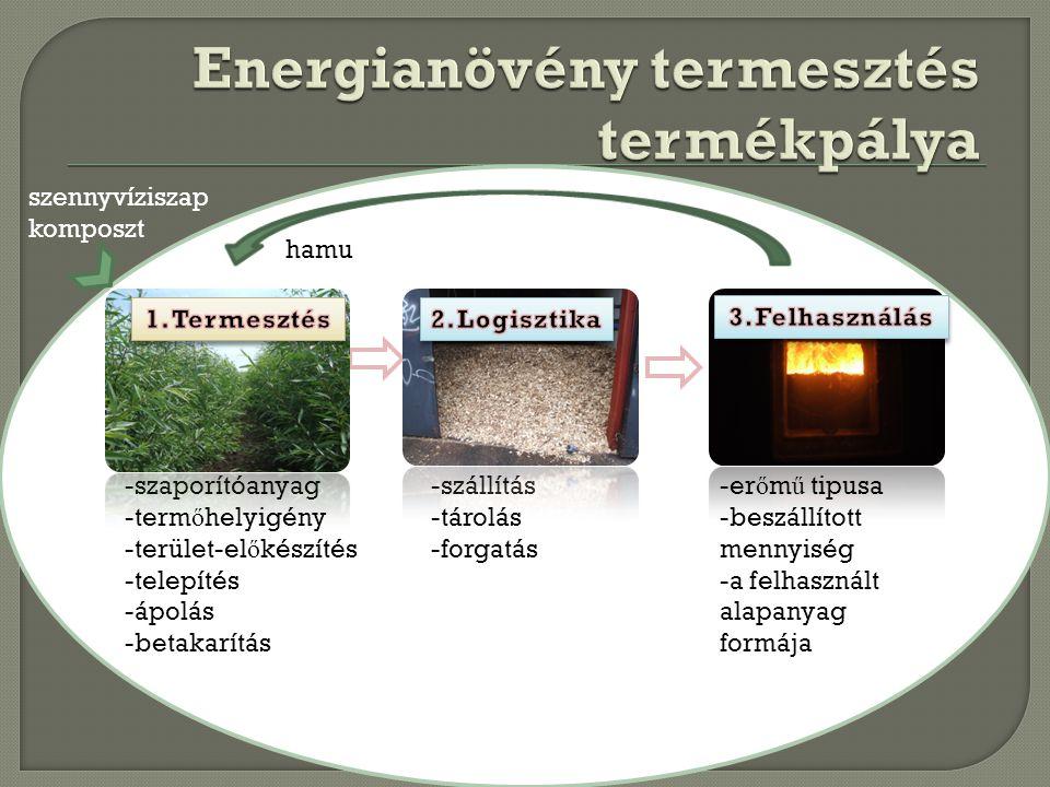 Energianövény termesztés termékpálya