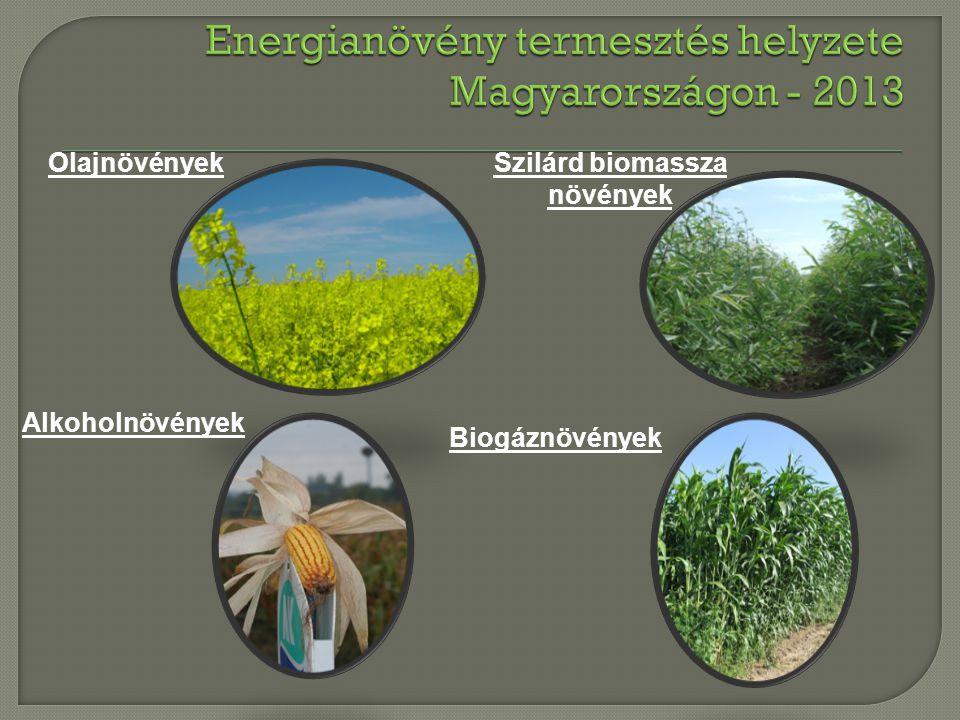 Energianövény termesztés helyzete Magyarországon - 2013
