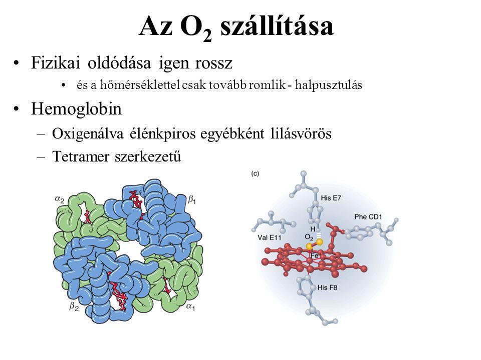 Az O2 szállítása Fizikai oldódása igen rossz Hemoglobin