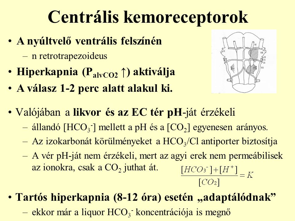 Centrális kemoreceptorok