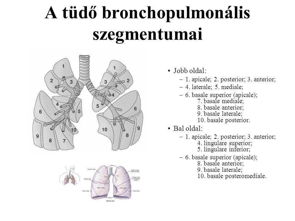 A tüdő bronchopulmonális szegmentumai
