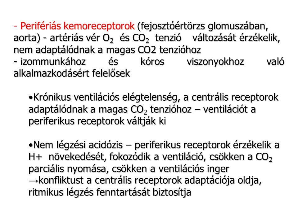 - Perifériás kemoreceptorok (fejosztóértörzs glomuszában, aorta) - artériás vér O2 és CO2 tenzió változását érzékelik, nem adaptálódnak a magas CO2 tenzióhoz