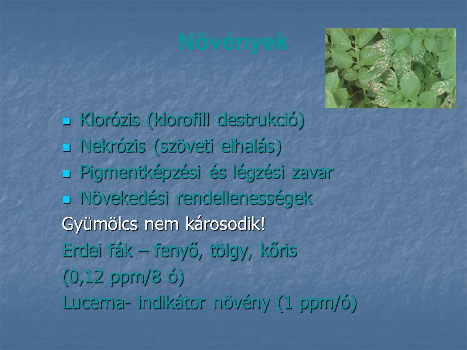 Növények Klorózis (klorofill destrukció) Nekrózis (szöveti elhalás)