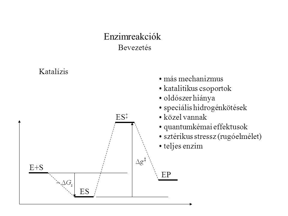 Enzimreakciók Bevezetés Katalízis • más mechanizmus