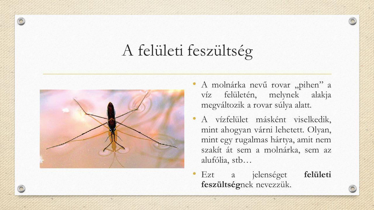 """A felületi feszültség A molnárka nevű rovar """"pihen a víz felületén, melynek alakja megváltozik a rovar súlya alatt."""