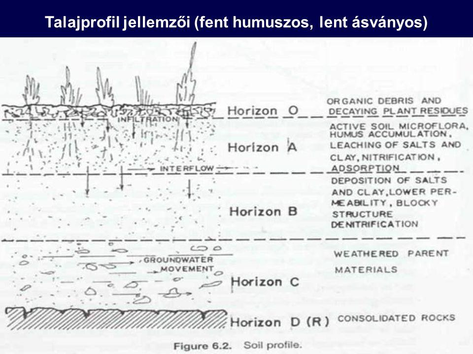 Talajprofil jellemzői (fent humuszos, lent ásványos)