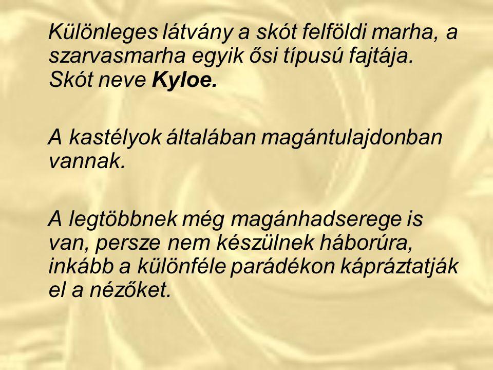 Különleges látvány a skót felföldi marha, a szarvasmarha egyik ősi típusú fajtája. Skót neve Kyloe.