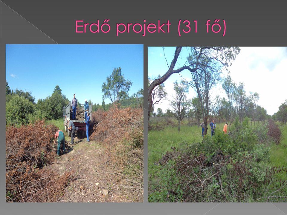 Erdő projekt (31 fő)