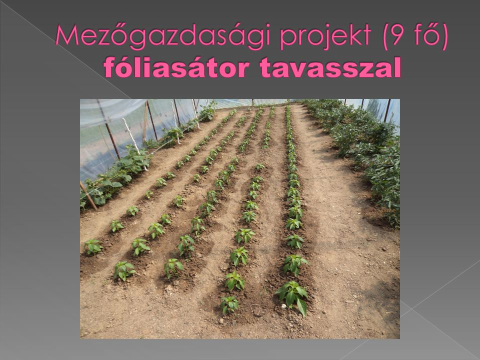 Mezőgazdasági projekt (9 fő) fóliasátor tavasszal
