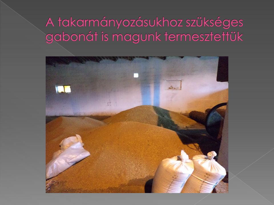 A takarmányozásukhoz szükséges gabonát is magunk termesztettük