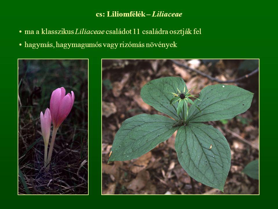 cs: Liliomfélék – Liliaceae