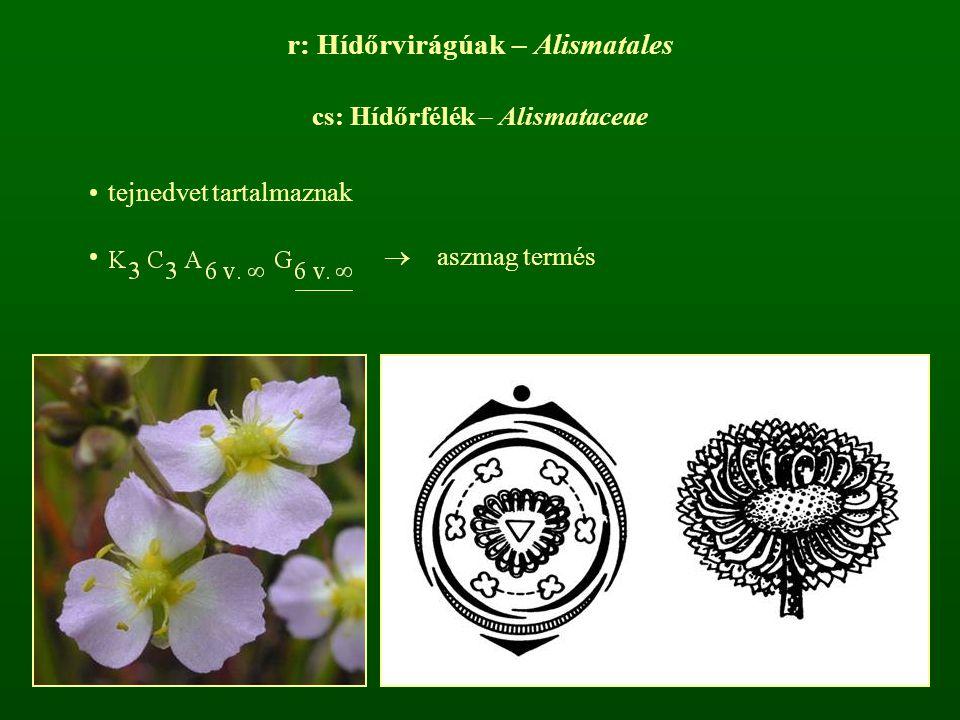 r: Hídőrvirágúak – Alismatales