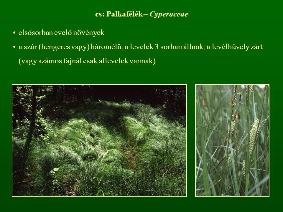 cs: Palkafélék – Cyperaceae
