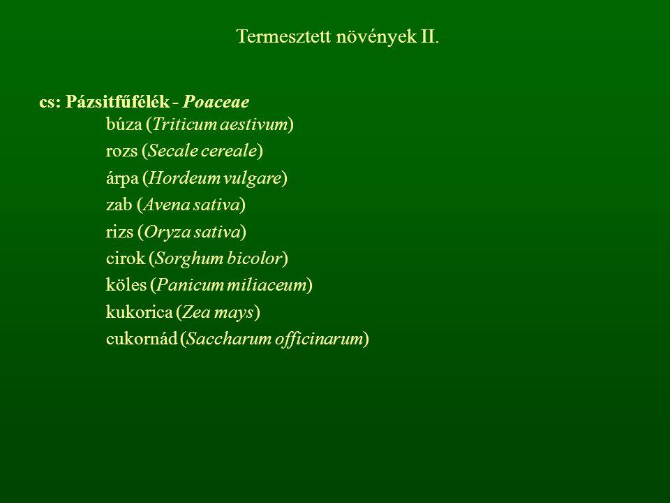 Termesztett növények II.