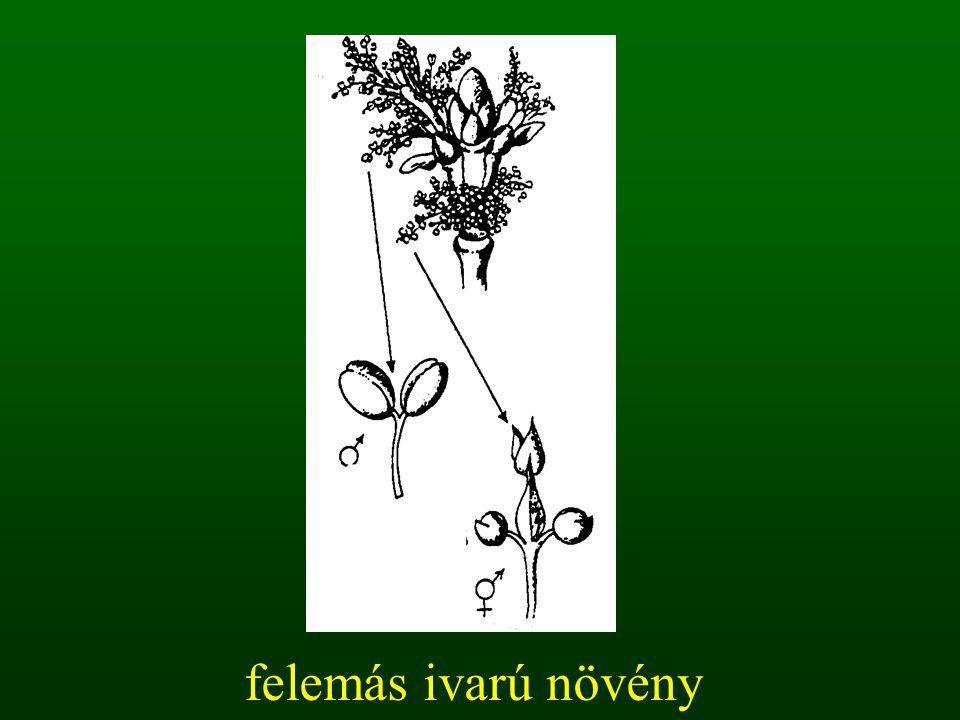 felemás ivarú növény
