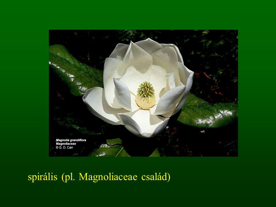 spirális (pl. Magnoliaceae család)