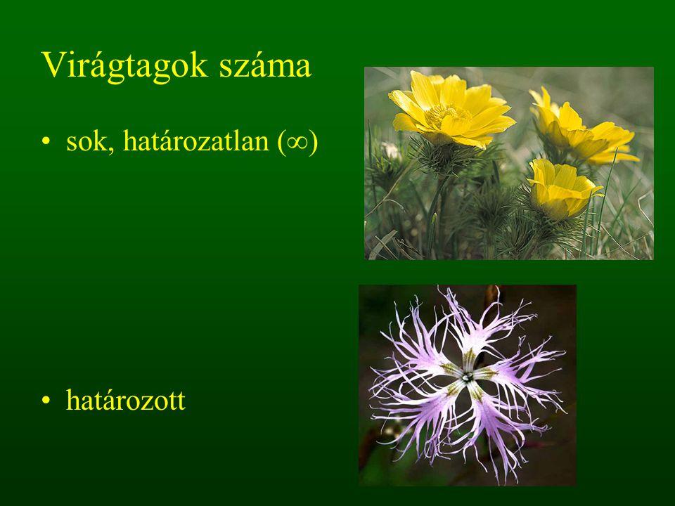 Virágtagok száma sok, határozatlan (∞) határozott