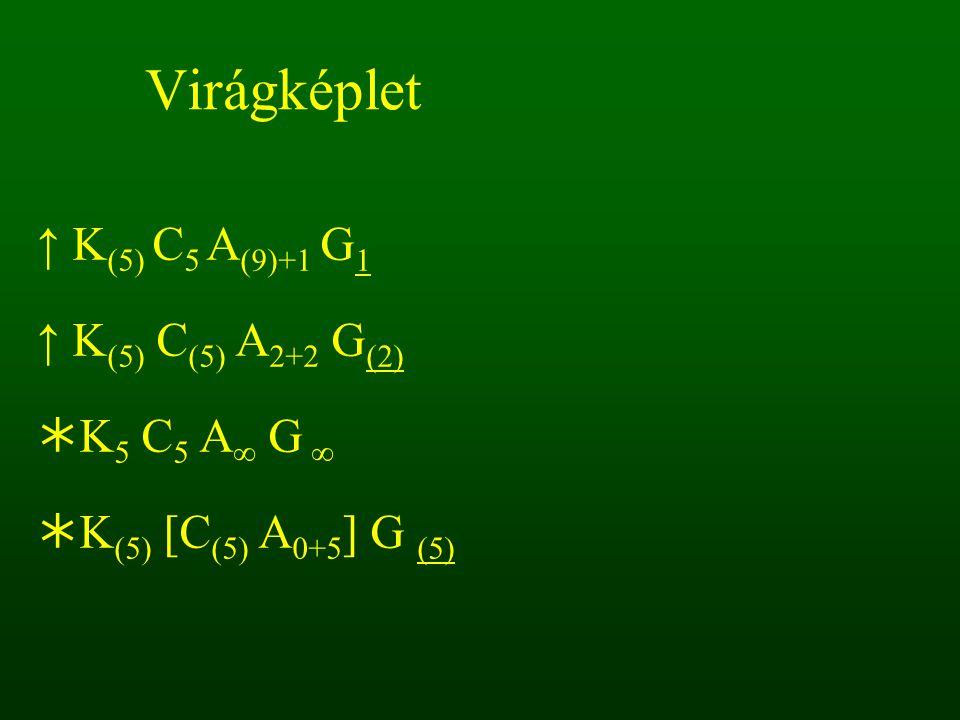 Virágképlet ↑ K(5) C5 A(9)+1 G1 ↑ K(5) C(5) A2+2 G(2) K5 C5 A∞ G ∞