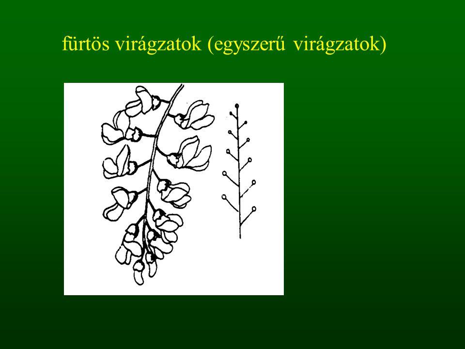 fürtös virágzatok (egyszerű virágzatok)