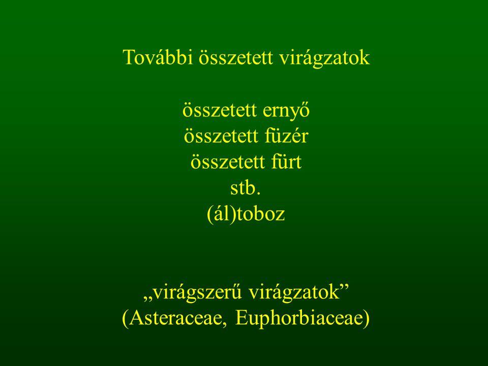 """""""virágszerű virágzatok (Asteraceae, Euphorbiaceae)"""