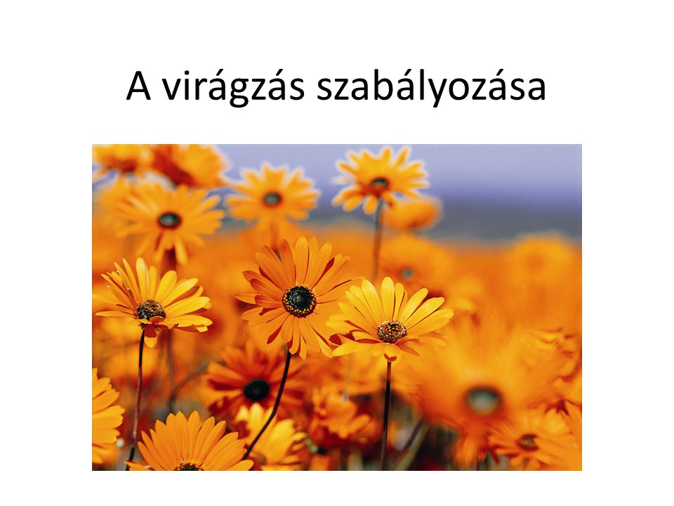 A virágzás szabályozása