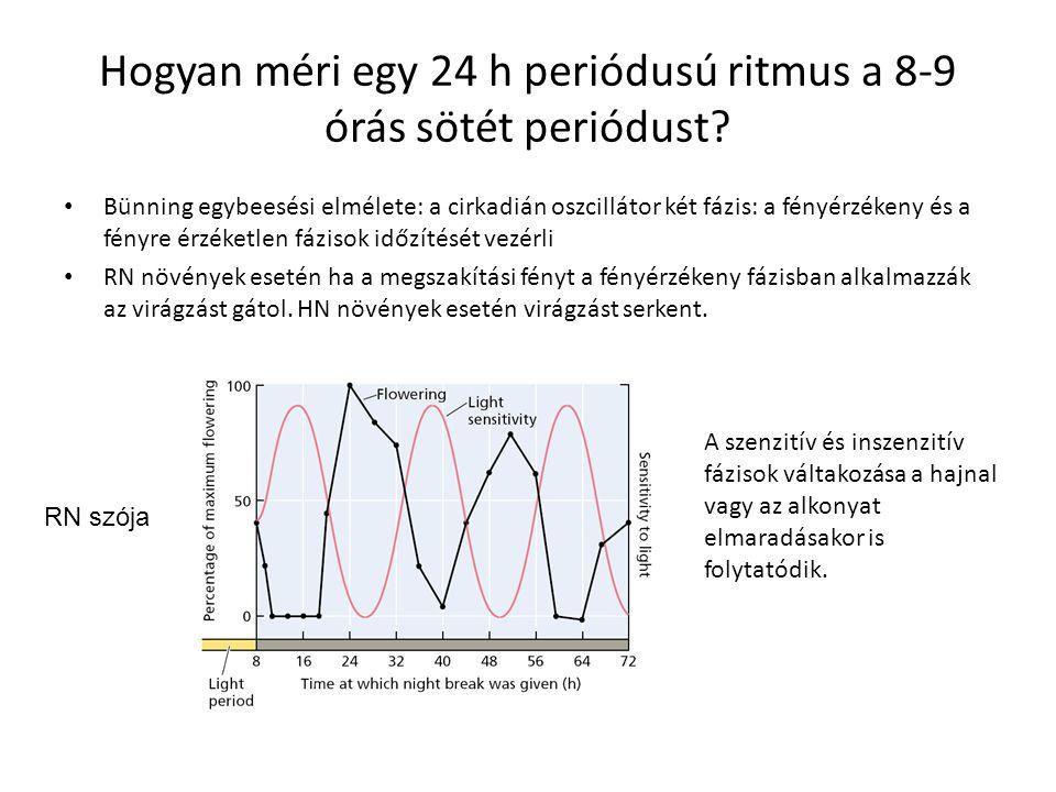 Hogyan méri egy 24 h periódusú ritmus a 8-9 órás sötét periódust