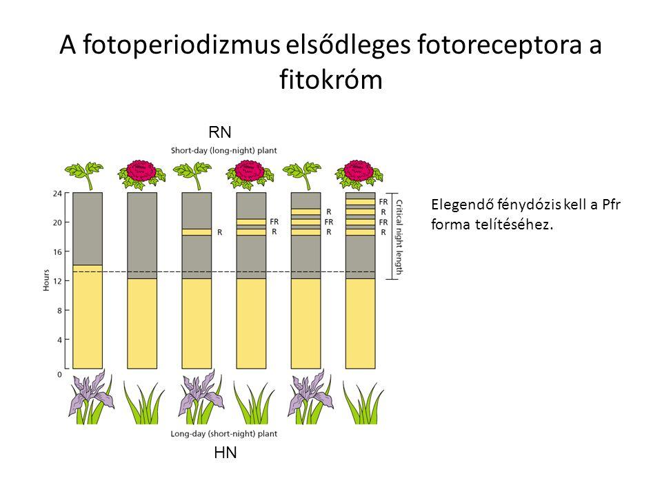 A fotoperiodizmus elsődleges fotoreceptora a fitokróm