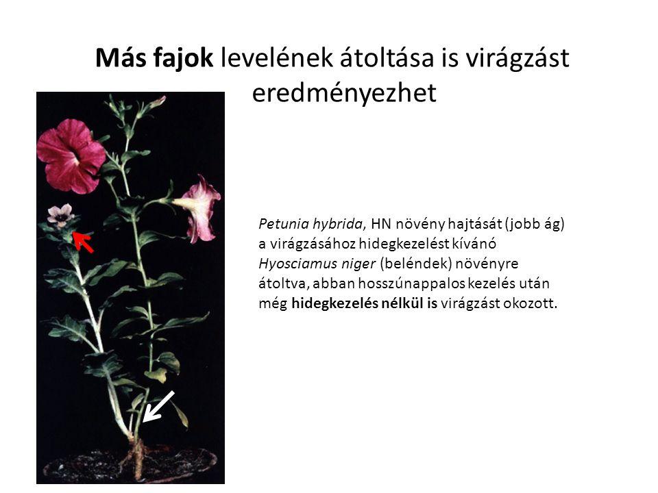 Más fajok levelének átoltása is virágzást eredményezhet
