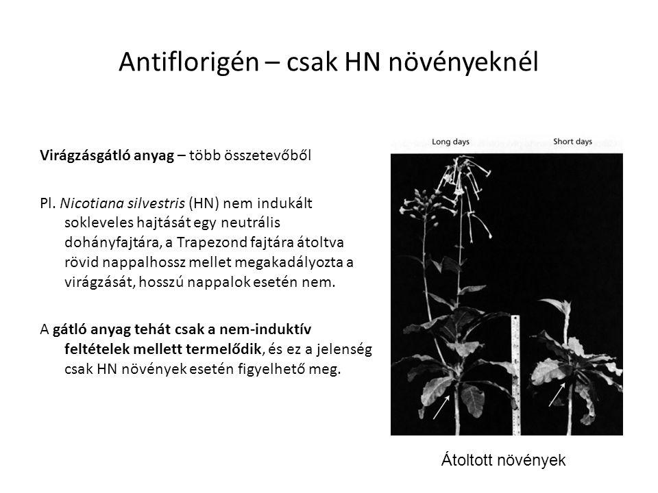 Antiflorigén – csak HN növényeknél