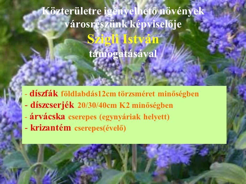 Közterületre igényelhető növények városrészünk képviselője Szigli István támogatásával