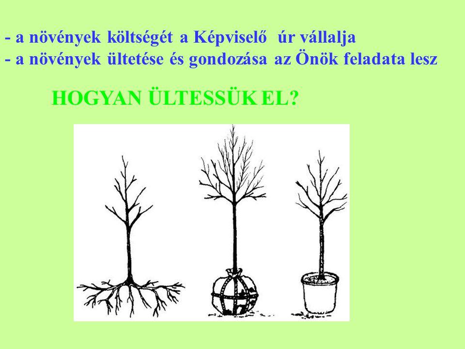 HOGYAN ÜLTESSÜK EL - a növények költségét a Képviselő úr vállalja