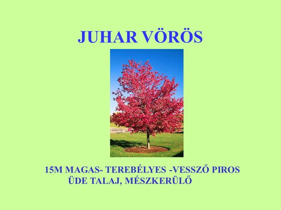 JUHAR VÖRÖS 15M MAGAS- TEREBÉLYES -VESSZŐ PIROS ÜDE TALAJ, MÉSZKERÜLŐ