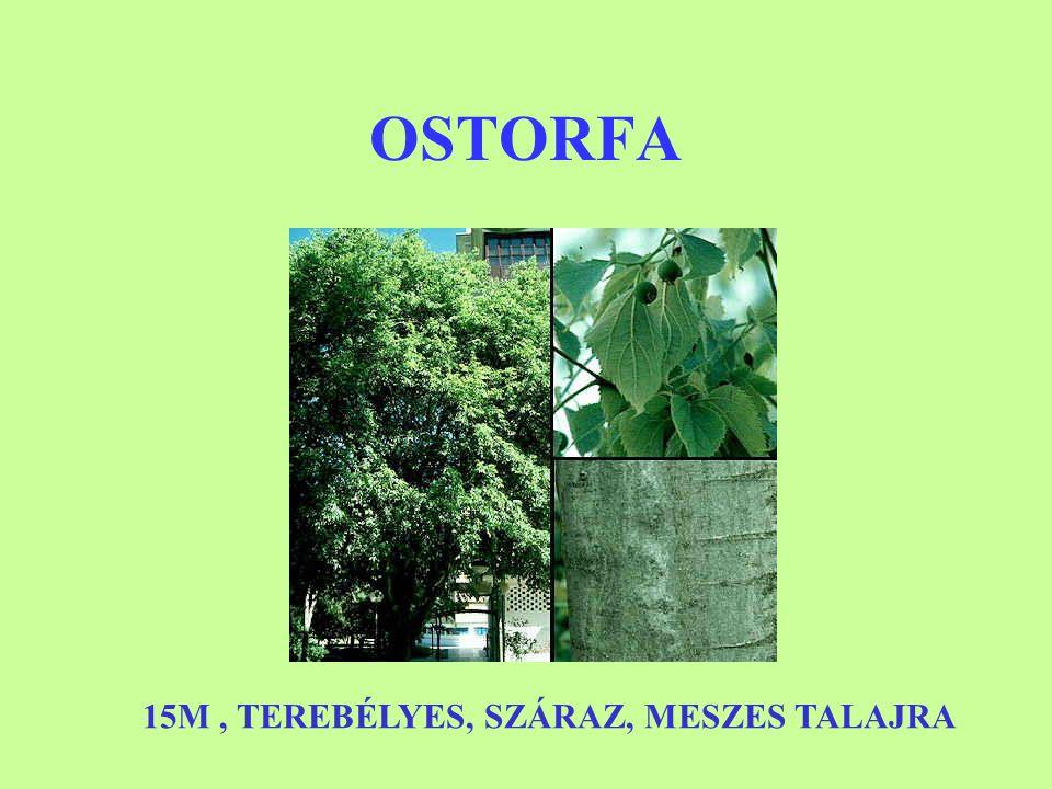 OSTORFA 15M , TEREBÉLYES, SZÁRAZ, MESZES TALAJRA