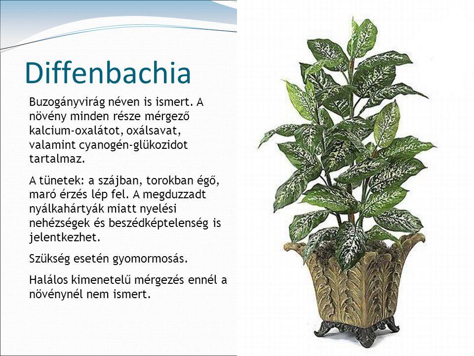 Diffenbachia Buzogányvirág néven is ismert. A növény minden része mérgező kalcium-oxalátot, oxálsavat, valamint cyanogén-glükozidot tartalmaz.